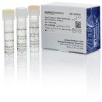 Amplitaq Gold DNA Polymerase with Gold Buffer and MgCl2